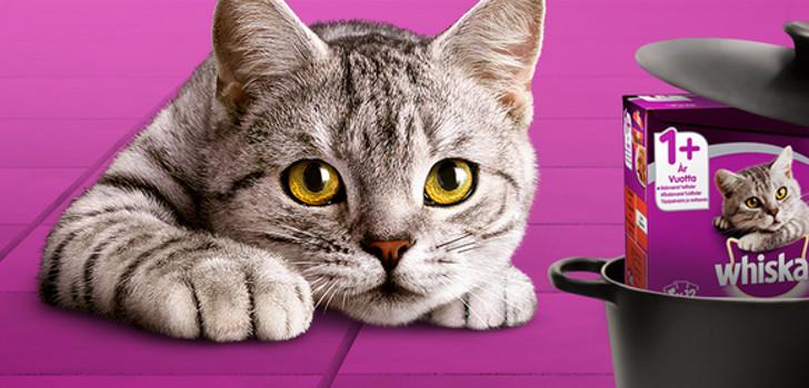 bild på katt med nya whiskas ragout