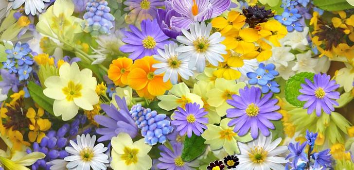 rabatt på blommor hos flower house